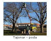 Poda en Tajonar
