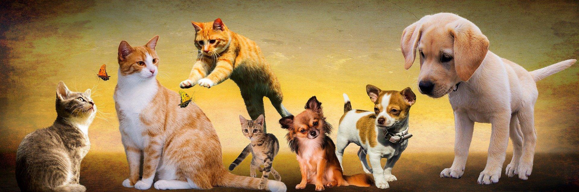 Imagen Campaña de Esterilización de Perros y Gatos 2020: Convocatoria de Ayudas